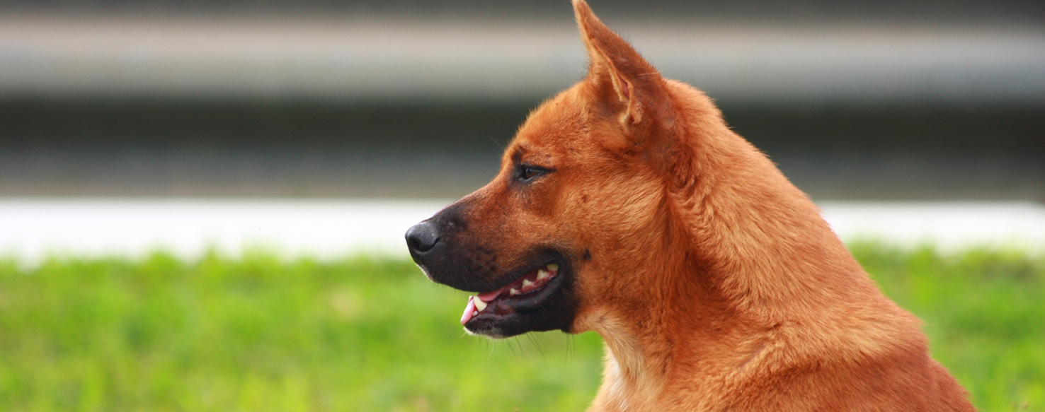 Dog Care - What is an Animal Behavior Specialist?