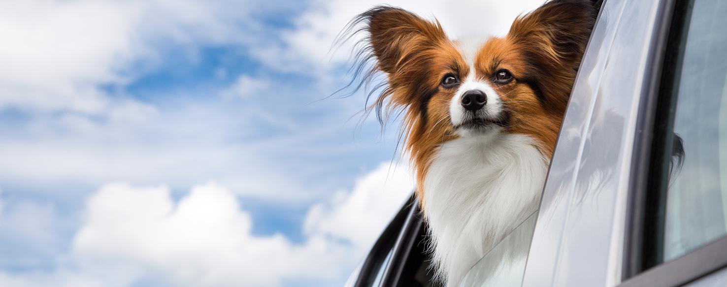 Pet Care - Is Your Car Pet Friendly?
