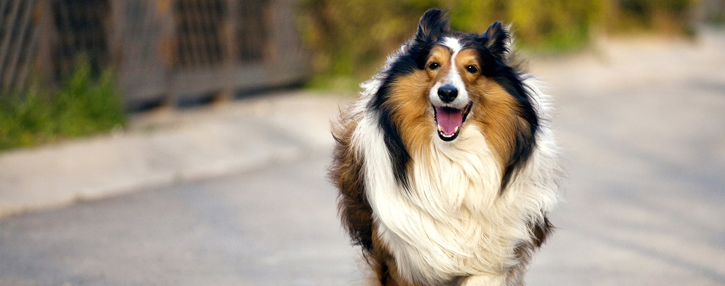 Dog Care - How to Choose a Great Boarding Kennel?