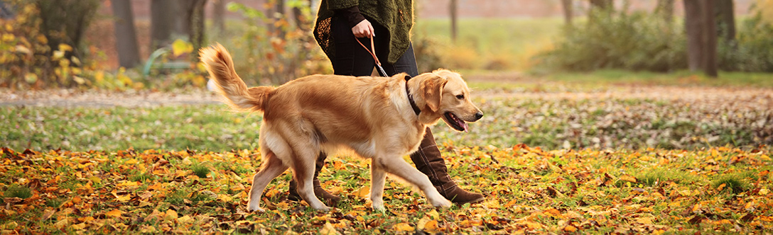 Dog Training - Dog Training Overview and Best Practices