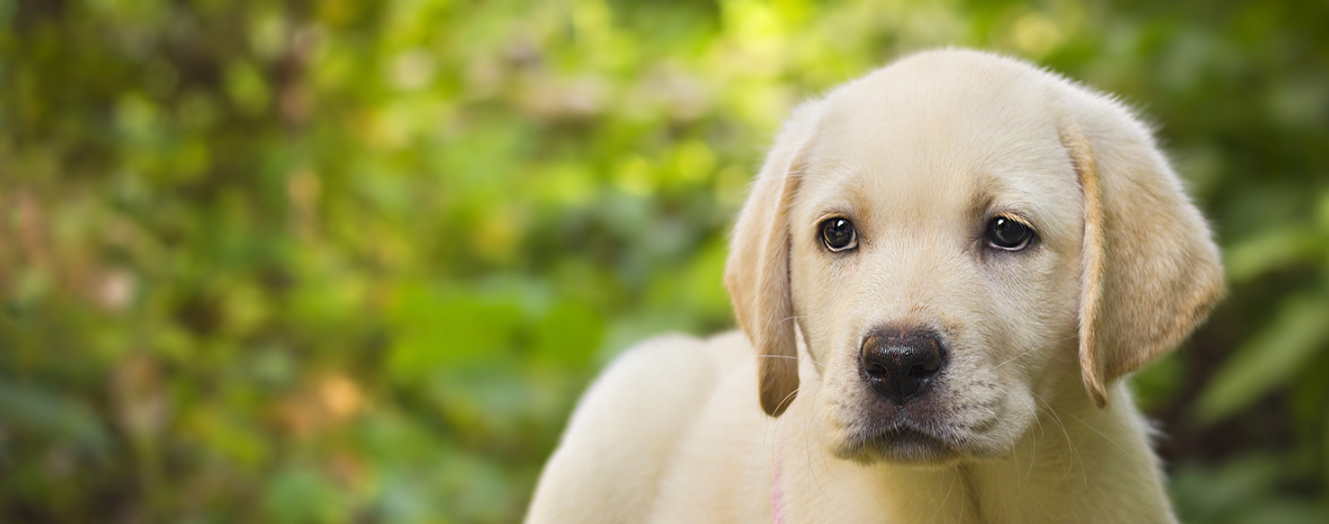 Dog Care - Financing Your Puppy: 7 Things to Consider Before Getting a New Pet