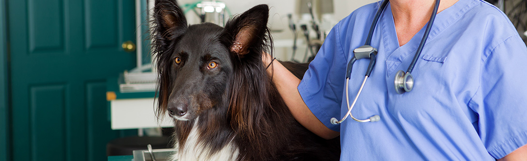 Dog Health - Five Ways to Prevent Congenital Problems in Dogs
