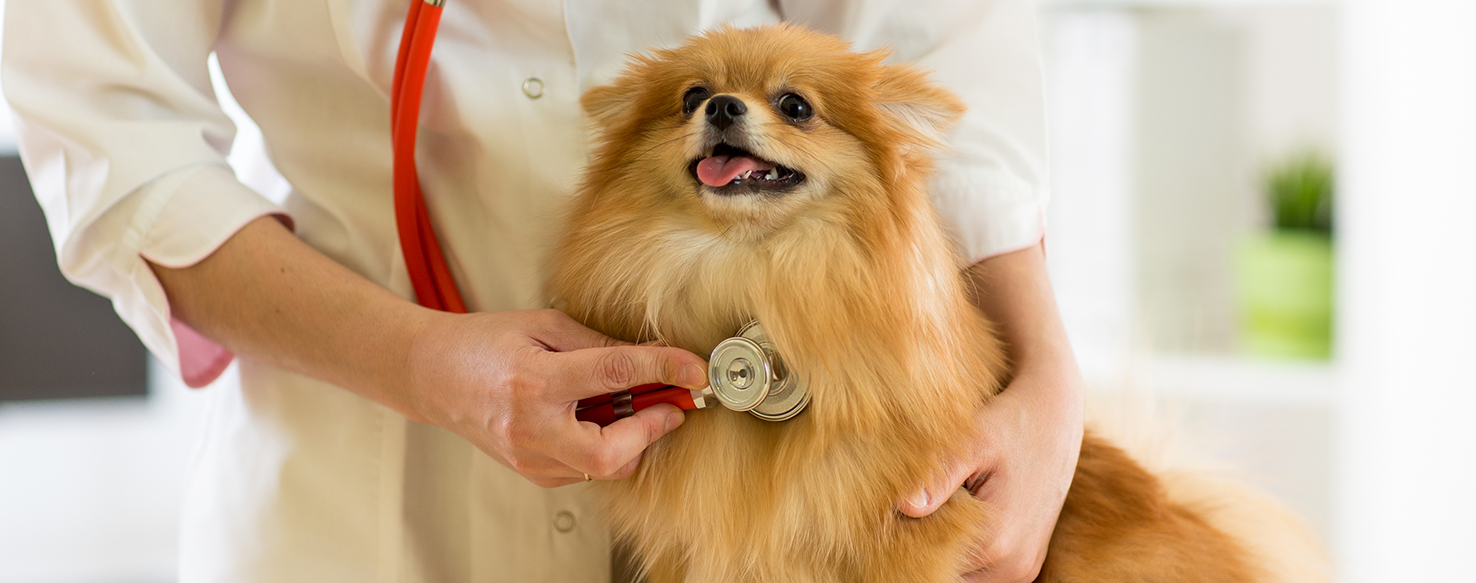 Dog Care - What Makes a Great Mobile Veterinarian?