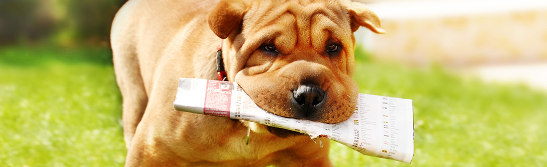 Dog Breeders - Interpreting Classified Ads for Dogs