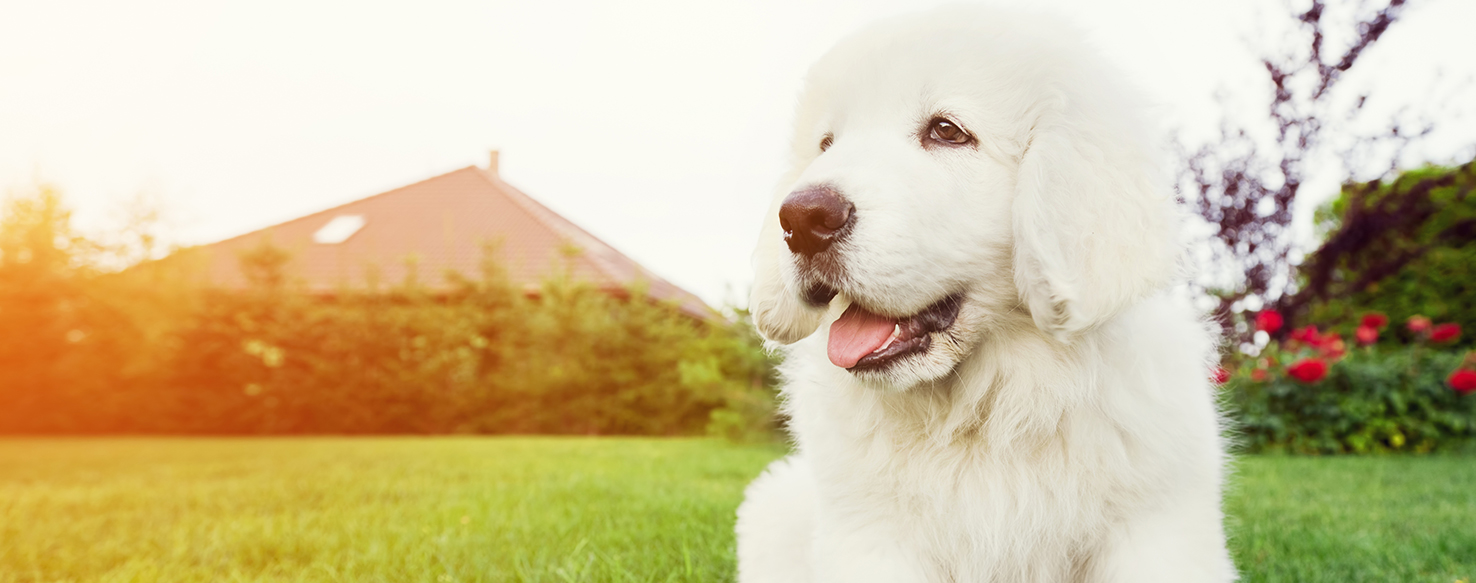 Dog Care - How to Choose a Great Pet Sitter