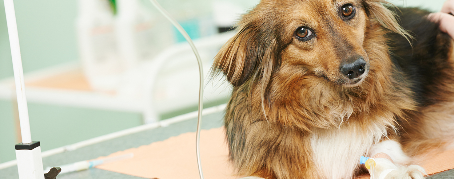Dog Care - Why Do Pet Drugs and Medicine Cost So Much?