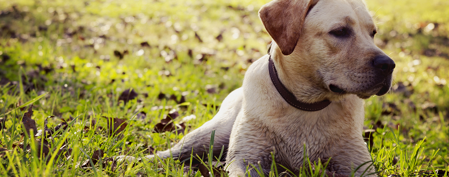 Dog Care - Top Signs You Need a New Veterinarian