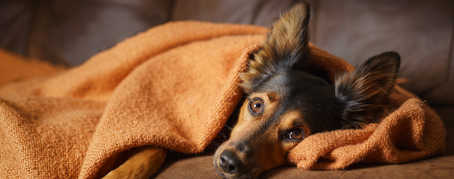 Dog Care - Top Tips for Calming Your Pet during Thunderstorms, Fireworks, and Firecrackers