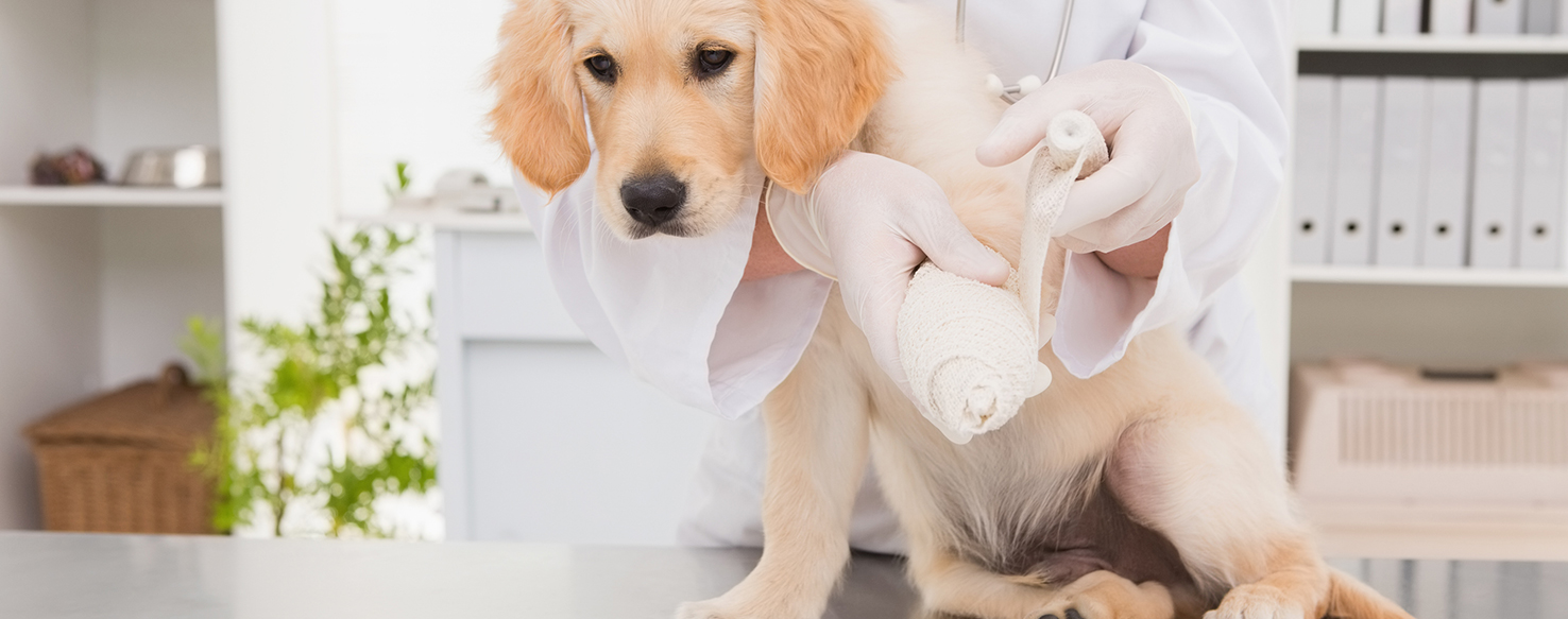 Pet Care - What is a Veterinary Pathologist?