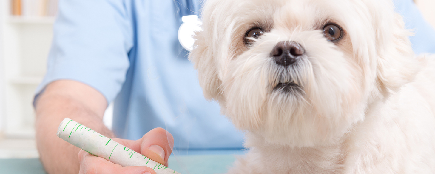 Pet Care - What is a Veterinary Pharmacologist?