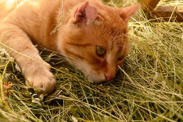 Excess Magnesium in the Blood in Cats