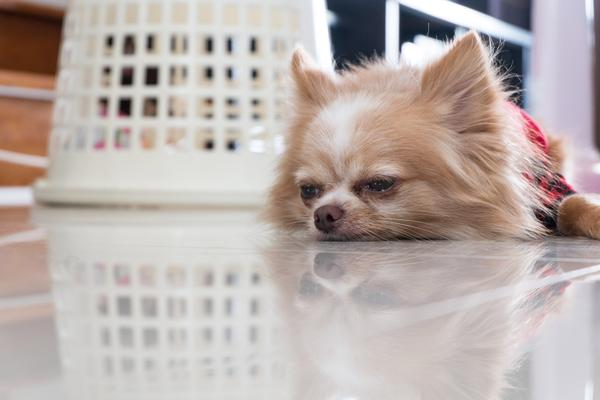 E. Coli Infection in Dogs