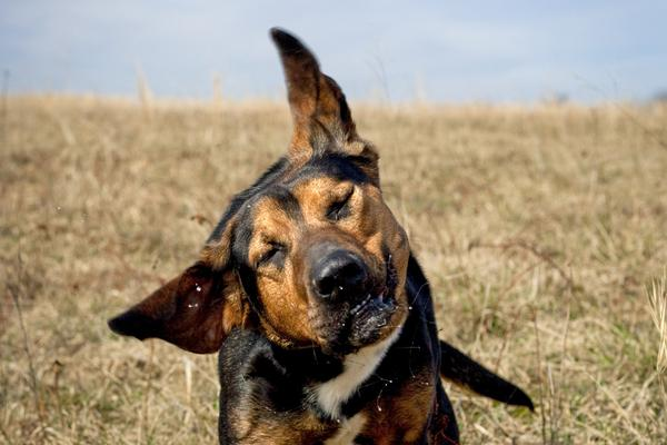 What causes tumors in a dog?
