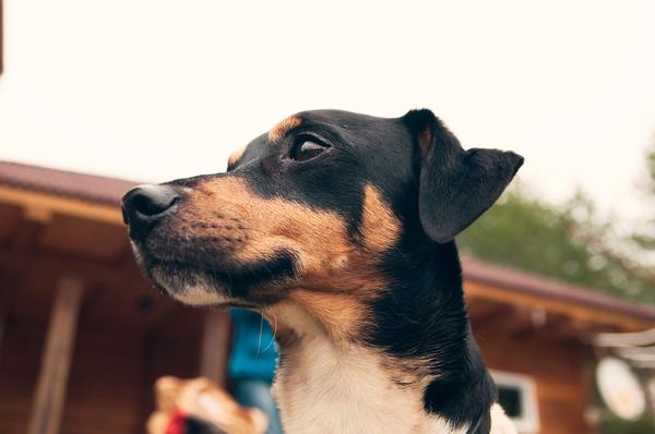 Excessive Bacteria in the Small Intestine in Dogs