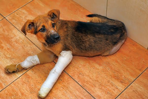 как ухаживать за собакой со сломанными лапами