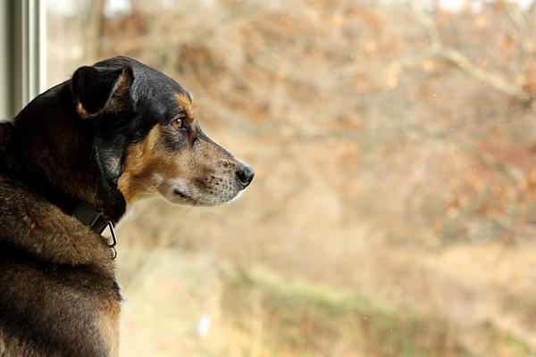 Can Anxiety Cause Itching In Dogs